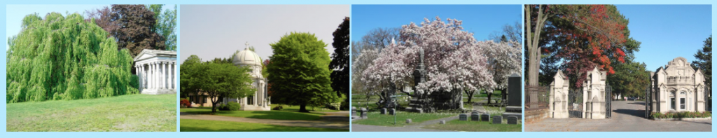 Views of Woodlawn Cemetery